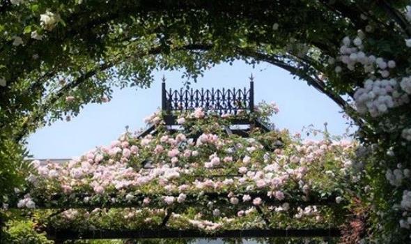 望湖玫瑰花园